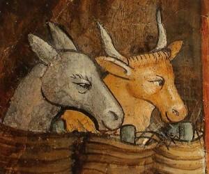 boeuf et âne gris